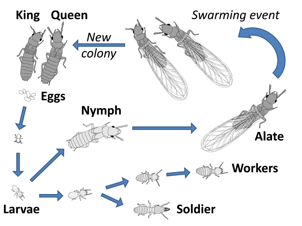 life-cycle--sub-page_full-diagram